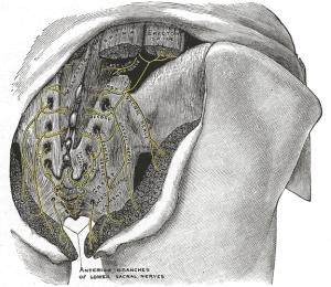 Sacral-Nerve-Stimulation-3