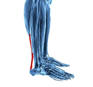 achilles tendonitis, with lower leg muscles