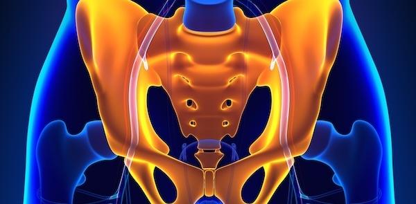Hip Pelvic Sacrum Bone Anatomy with Circulatory System
