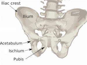 Pelvis-diagram