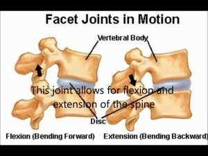 facet-joint-motion