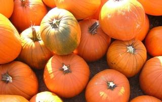 Recipe: Anti-Inflammatory Pumpkin Pasta for Arthritis Pain | PainDoctor.com