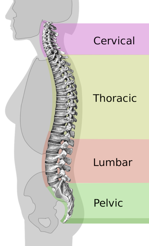 What Is Lumbar Spinal Stenosis? | PainDoctor.com