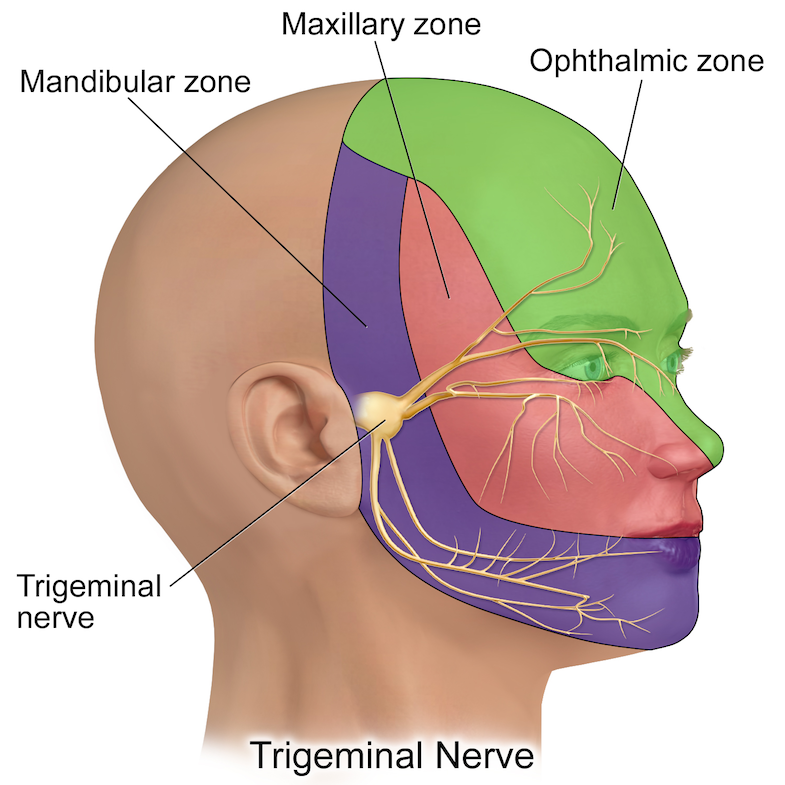 13 Trigeminal Neuralgia Symptoms You Should Know | PainDoctor.com